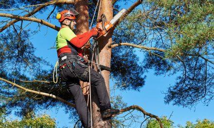 CEFA à Montélimar, l'école de la filière forêt-bois
